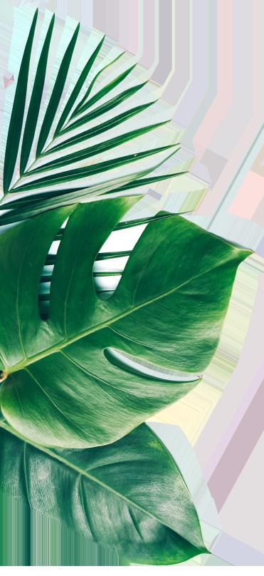 facier leaf1